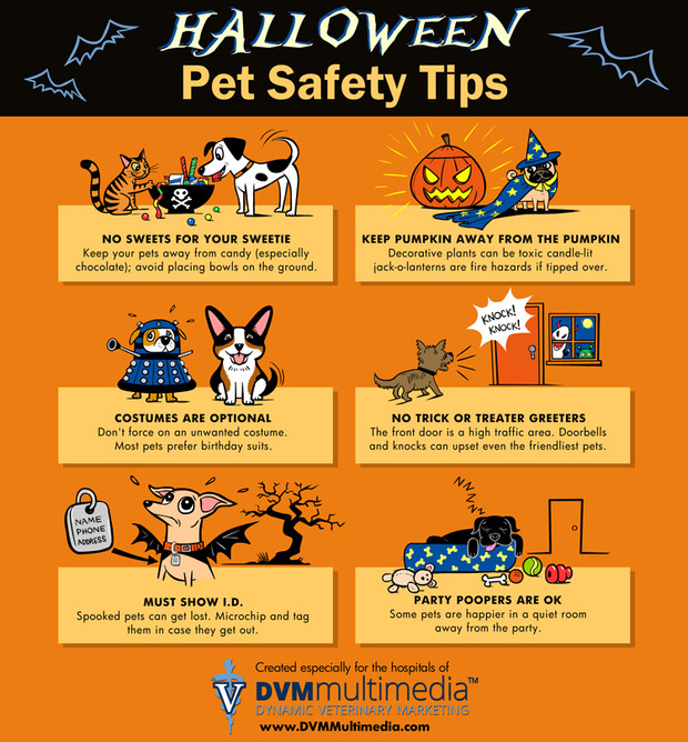 Pet Safety - Halloween