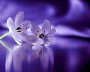 lavendar flowers.jpg