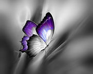 purple gray butterfly.jpg