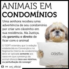 Cachorro pode viver em condôminio SIM!
