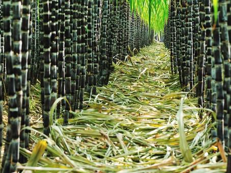 Brazilian Sugar Refined ICUMSA 45 90 150 Raw 800-1200