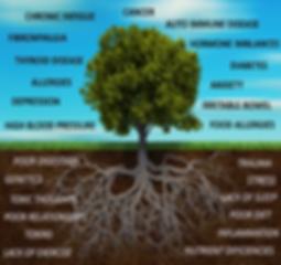 functional medicine st louis tree