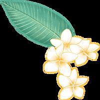 Plumeria Flower_edited_edited.png