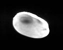 Sample of transparent photograph