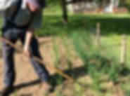 John gardening_edited.png