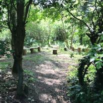 Canhams Wood