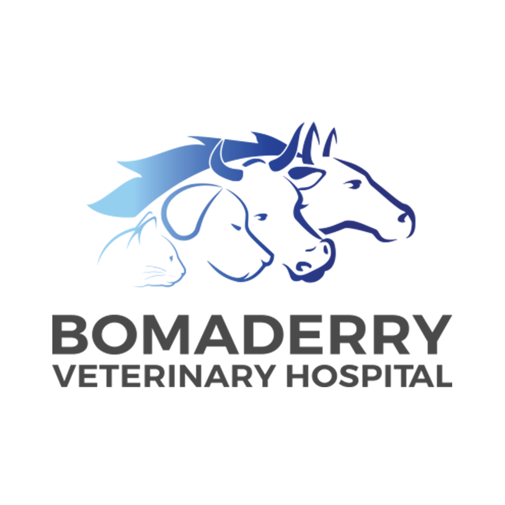 PROFILE PIC - BOMADERRY