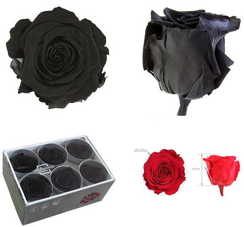 6 Roses NOIR Standard