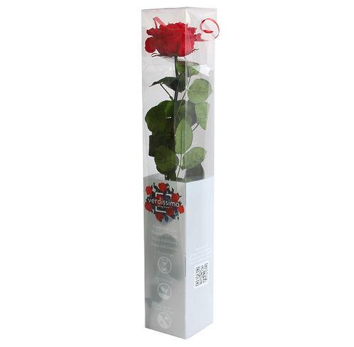 Rose à tige Premium ROUGE 55CM