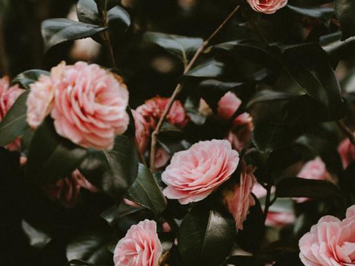 5 plantes pour harmoniser son cycle