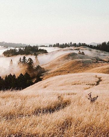 paysage campagne brume sapin.jpg