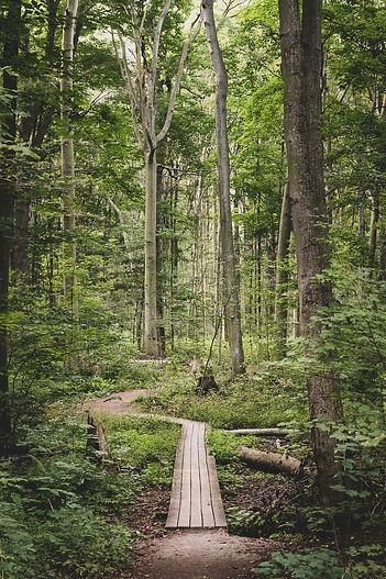 Woods boardwalk.jpeg