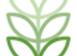 leaf - favicon.png