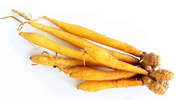 Finger root/Rhizome