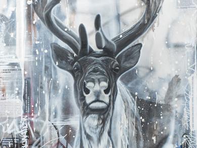 Le caribou : populations en déclin