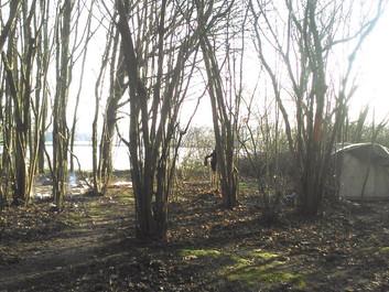 Des fuyards dans une forêt ensorcelée en littérature face à des fuyards près d'un lac pollué bien ré