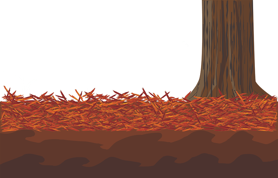 mulch&tree.tif