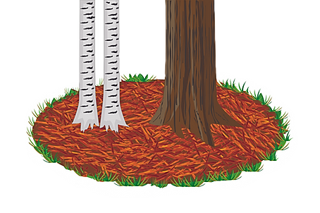 trees and mulch.png