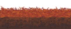 mulch&soil.tif