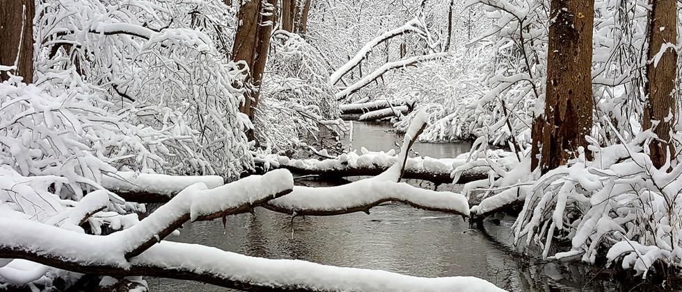 fresh snow across the creek