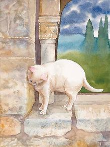 white abby cat.jpg