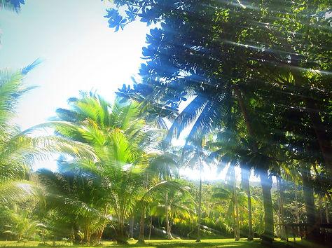美しいココナッツファーム