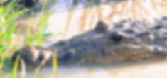 Close up Favorite_edited.jpg