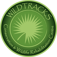 wildtracks.png