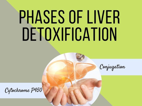 How Liver Detoxification Works: the natural phases of detox