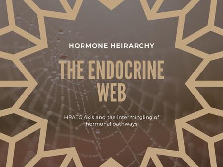 Hormone Hierarchy
