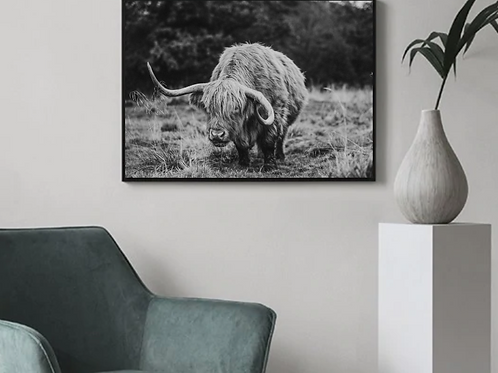 Scottish Highland Cow Poster Print - A4