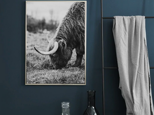 PORTRAIT OR LANDSCAPE A4 BLACK AND WHITE HIGHLAND COW POSTER PRINT