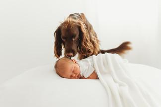 babydogsneaks-2.jpg