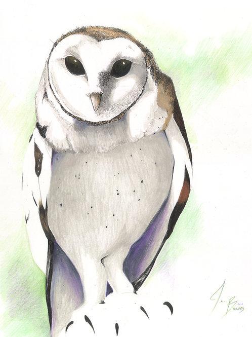 Hello, I Am a Barn Owl