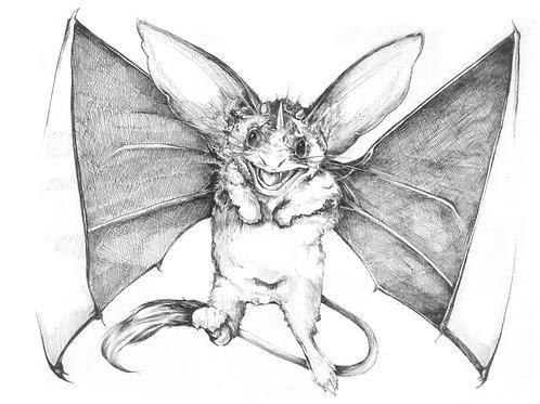 Kangaroo Bat