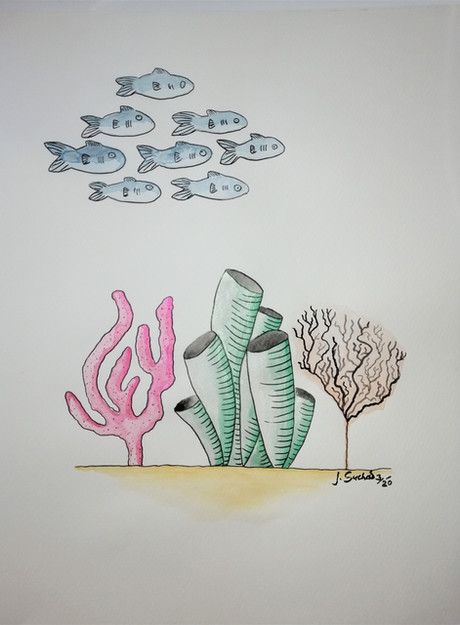 Just fish and corals
