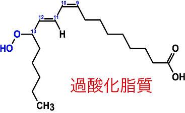 不飽和脂肪酸3.jpg