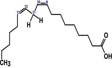 不飽和脂肪酸2.jpg