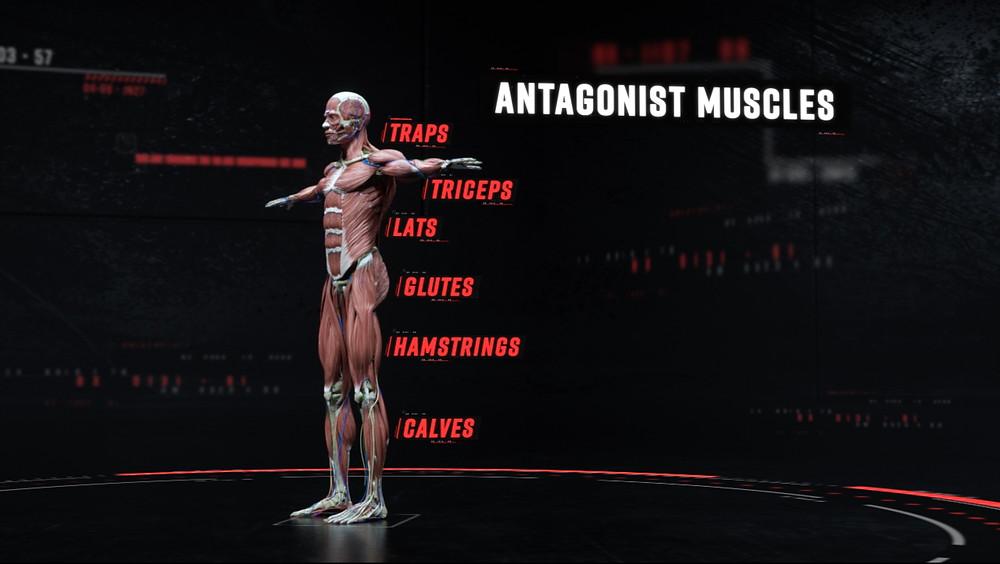 King Penguin ESPN Sport Science Bryson DeChambeau Antagonist Muscles