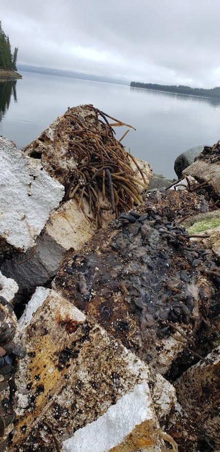 Removing marine growth