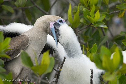 c_2018_03_21_Ecuador-Galapagos_5517_1.jpg