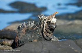 c_2018_03_22_Ecuador-Galapagos_5889_1.jpg