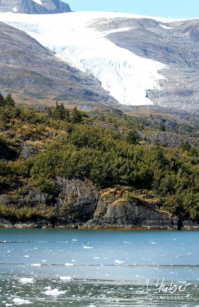 Gletscher in Whittier
