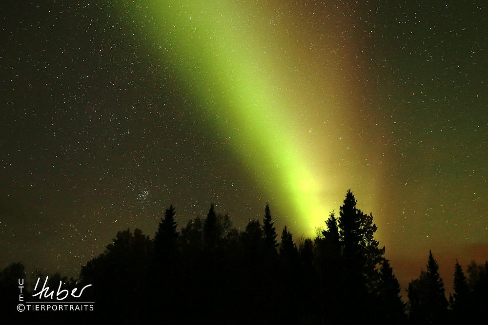 Polarlicht nördlich von Fairbanks
