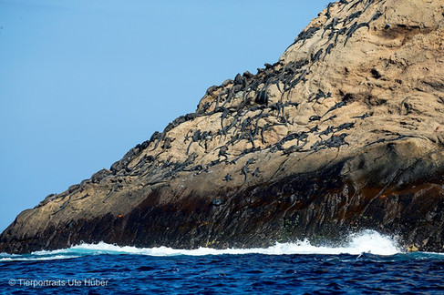 c_2018_03_23_Ecuador-Galapagos_6553_1.jpg