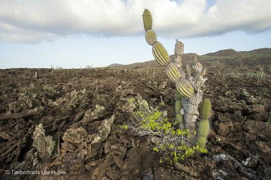 c_2018_03_22_Ecuador-Galapagos_6144_1.jpg