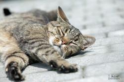Katzenfotografie Ostalbkreis