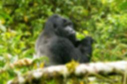 c_2019_02_22_Uganda_5207_1.jpg