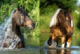 c_Pferde an der Rems_Titel.jpg