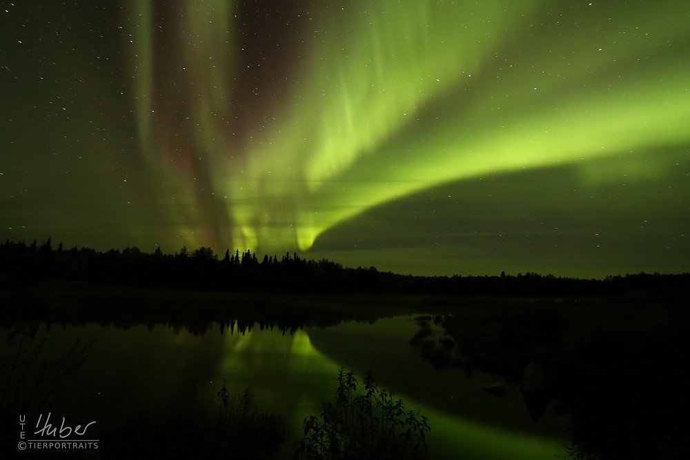 Polarlicht in Alaska